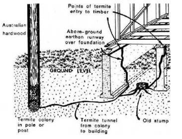 Termite Colony Diagram