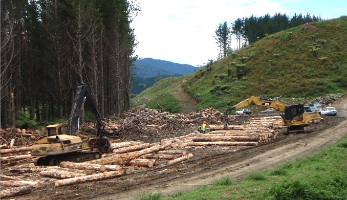 NZ Farm Forestry Timber Harvesting In New Zealand